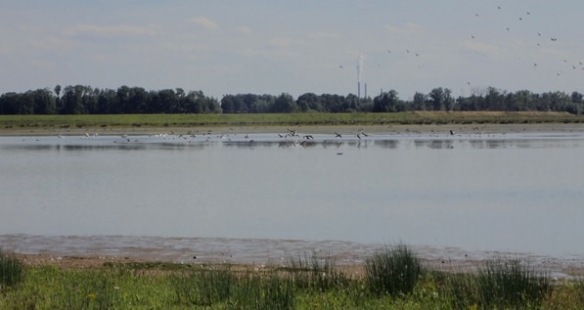 BiesBosch back to life