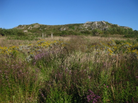 planted landscape