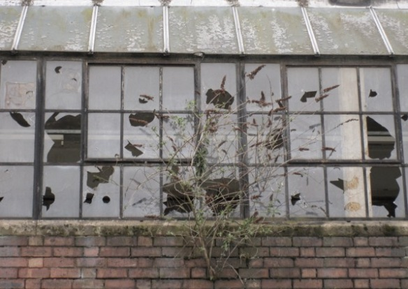 tree growing in old factory wall