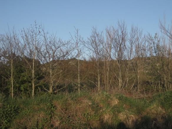Hedge Clegyr Boia