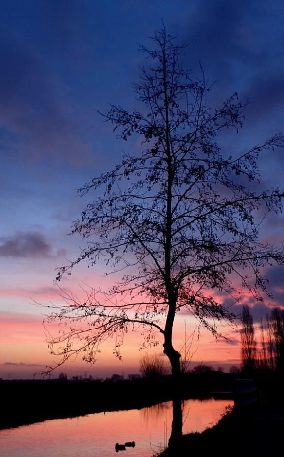 treessunrise