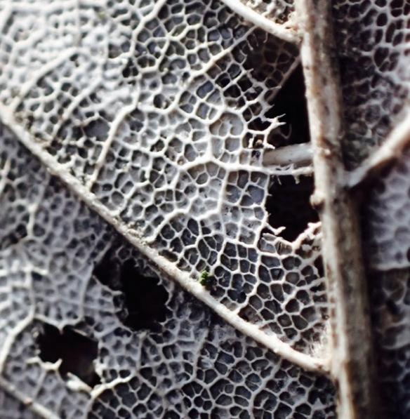leaf white bones