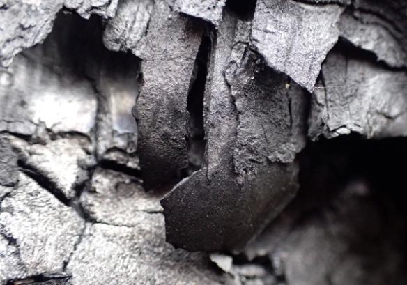 paperburnedwood