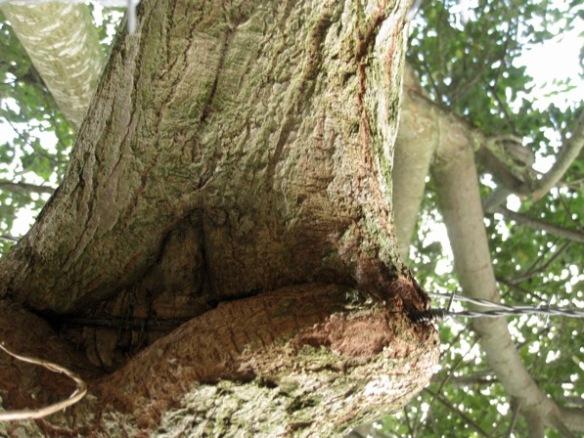 treeseatingprikkeldraad