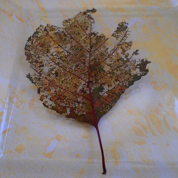 leafdripcombination